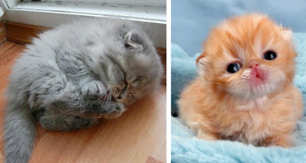 Ben noto I 20 gattini più carini di sempre. Micini irresistibili GY01