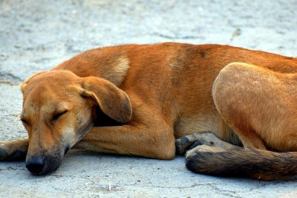 5 posizioni del cane mentre dorme che ti fanno capire il suo stato d'umore