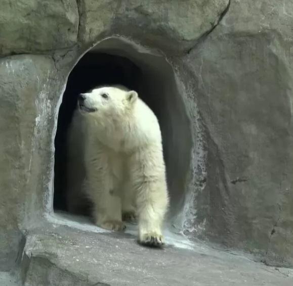 orso viene salvato e accudito da dei minatori dopo aver perso la sua mamma