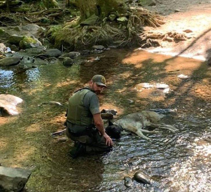ranger porta a spalla un cane disidratato fino al ruscello più vicino
