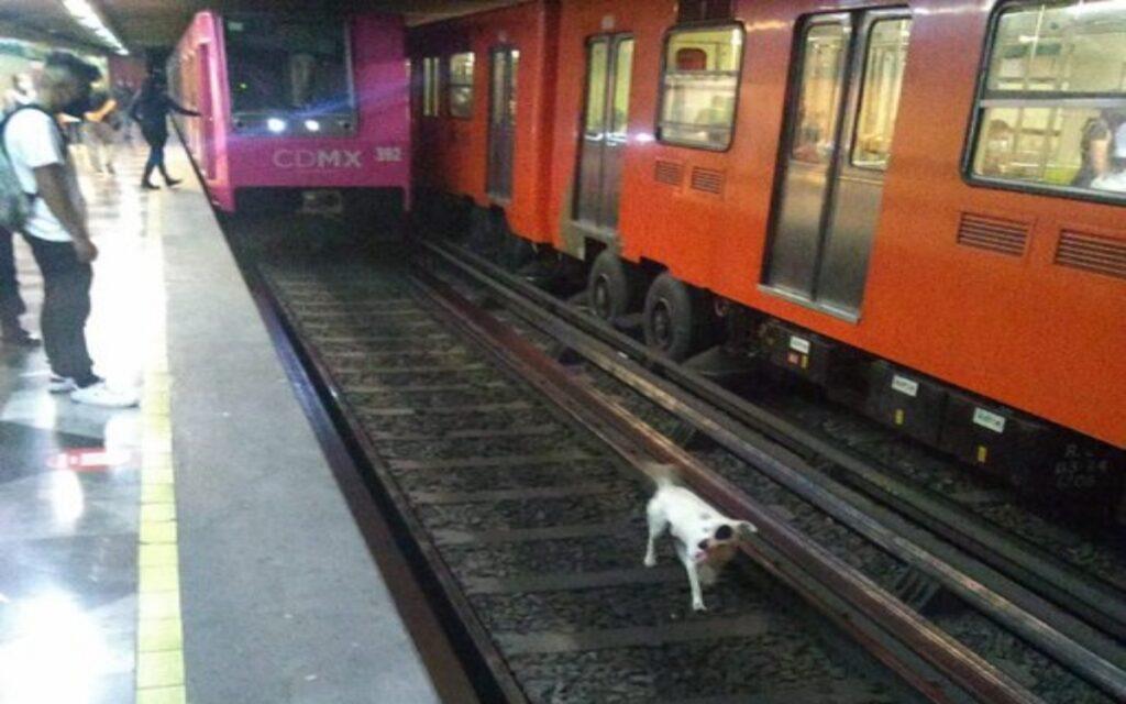 cane salvato dai binari in Città del Messico