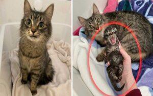 gattina sorride ai padroni che si prendono cura del suo unico cucciolo