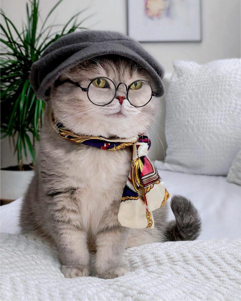 Gatto trova una nuova casa e diventa famoso grazie ai suoi abiti alla moda