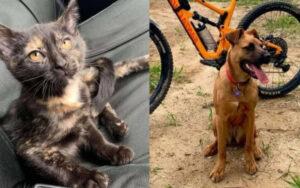 cane salva un gattino abbandonato dentro una foresta isolata