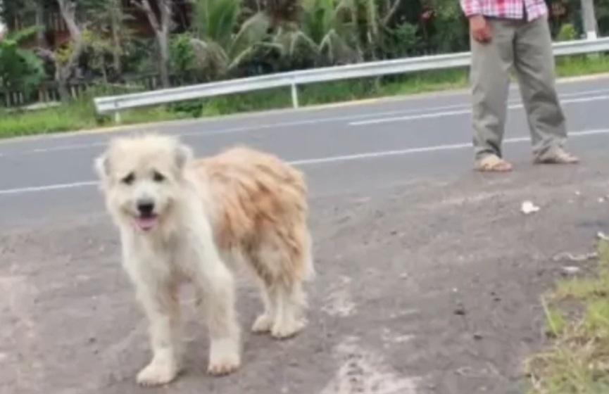cane dimenticato in una stazione di servizio aspetta la sua famiglia per 4 anni