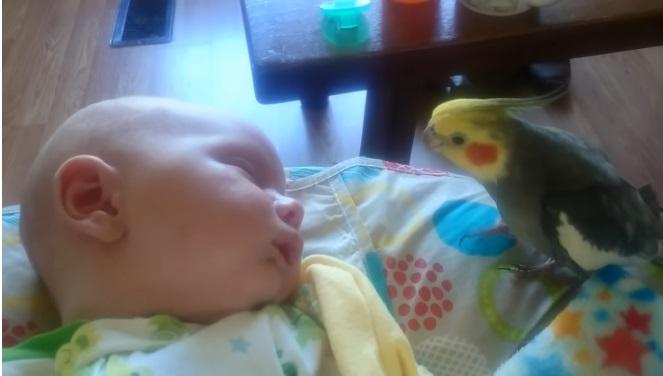 Uccellino da dei baci al bambino e gli canta una melodia per aiutarlo a dormire