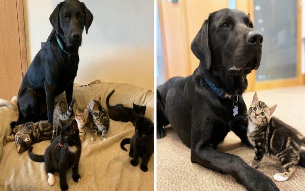 donna salva sette gattini abbandonati, che vengono accuditi dal cane