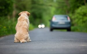 comportamenti da adottare nel caso si trovi un cane smarrito