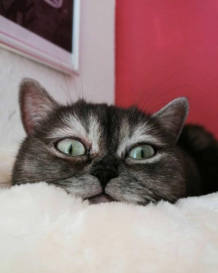 gatto viene ignorato in un rifugio a causa del suo aspetto brutto