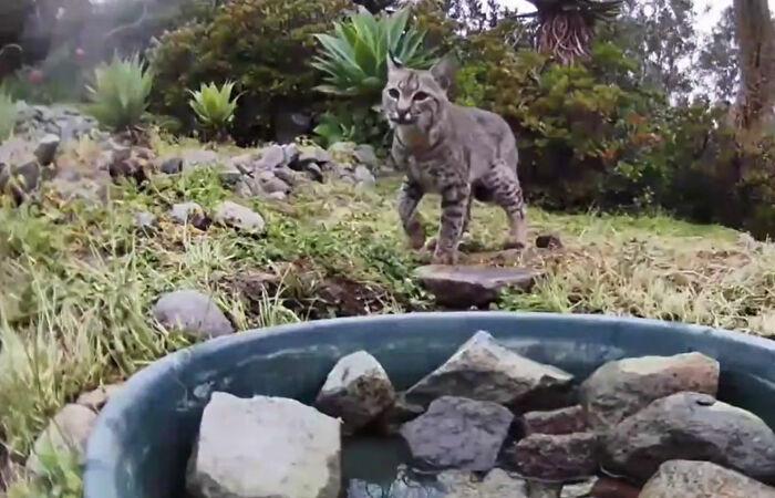 donna installa una fontana fuori la casa per aiutare decine di animali e una videocamera per riprendere gli animali notturni
