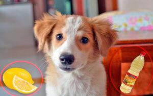 repellenti naturali da utilizzare per rimuovere l'urina dei cani