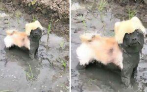 10 motivi per non far rotolare il cane nel fango