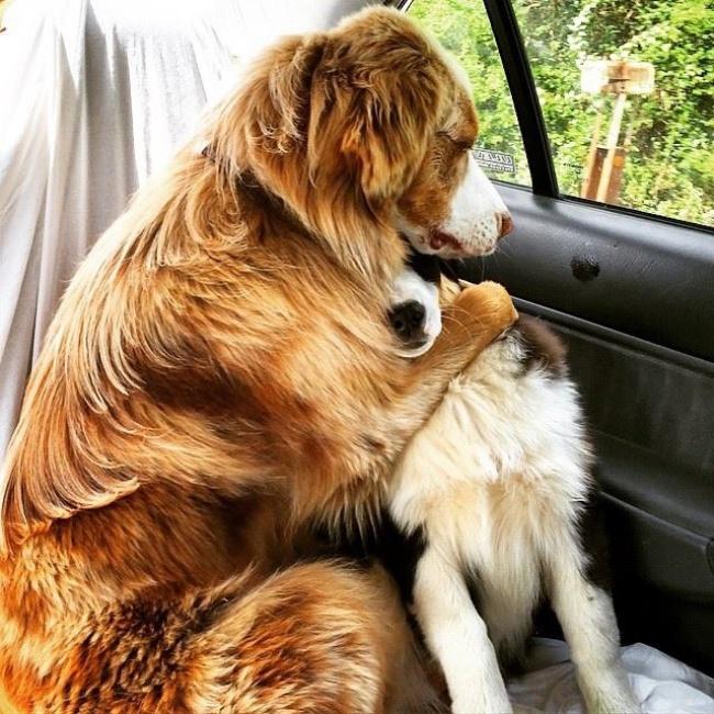 10 cani che si sentono ancora cuccioli