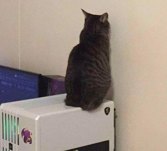 foto di gatti mentre fanno cose strane