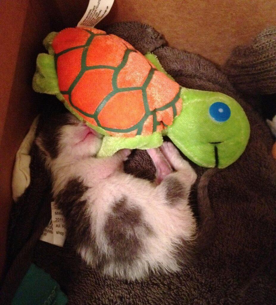 gattino viene salvato da un uomo dopo essere stato abbandonato dalla madre