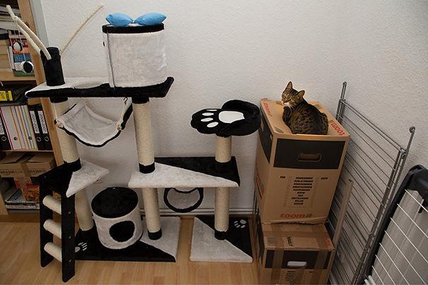 gatti usano doni degli umani in modo strano