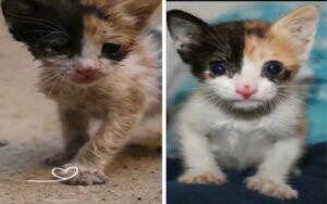 gattino salvato da un soccorritore