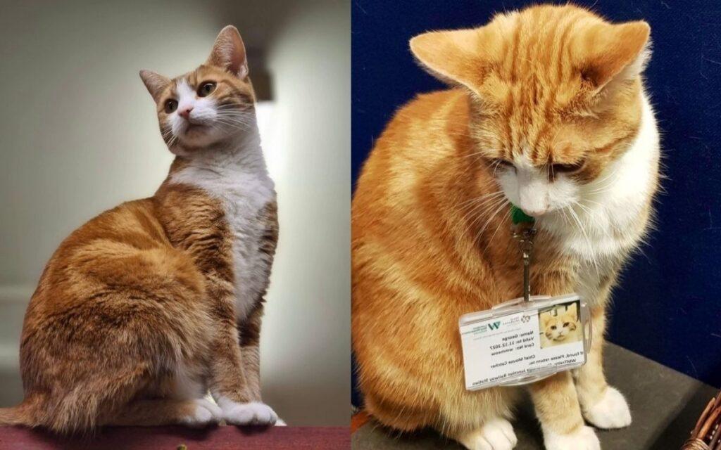 Gatto abbandonato viene assunto come capo cacciatore di topi in una stazione ferroviaria
