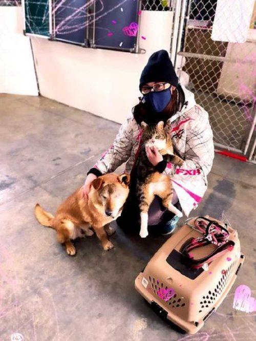 un cane cieco non riesce a lasciare il rifugio senza il suo inseparabile gatto guida