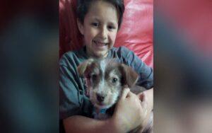 ragazzo salva un cucciolo da 4 malviventi, spendendo i suoi risparmi per le visite al veterinario