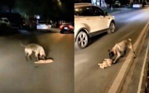 cane cerca di rianimare un gattino appena investito con tutte le sue forze