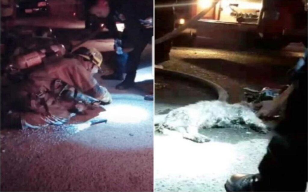 vigili del fuoco hanno salvato 6 cuccioli rimasti bloccati in un abitazione