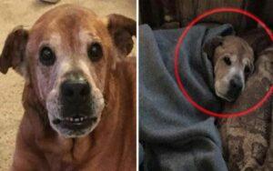 cane di 17 anni viene adottato e riesce a sopravvivere fino alla nascita della sua sorellina umana
