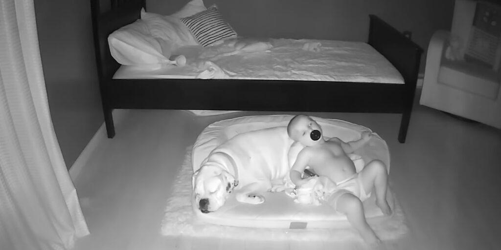 bambino dorme insieme al suo cane