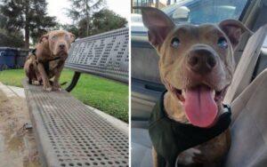 cagnolina abbandonata nel parco viene salvata e adottata