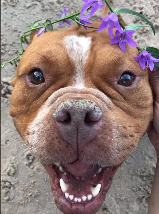 cane viene adottato in un rifugio e cambia vita