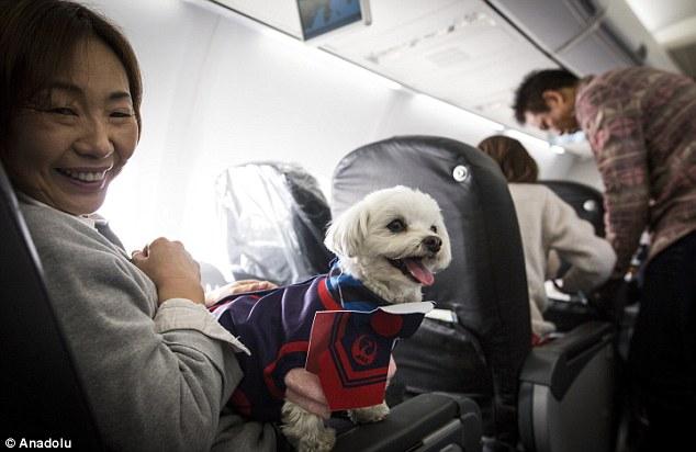 compagnie aeree permettono ai cani di viaggiare con i proprietari