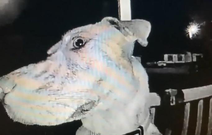 cane torna a casa alle 3 di notte suonando il campanello