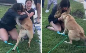 cane disperso torna a casa grazie a un associazione di animali