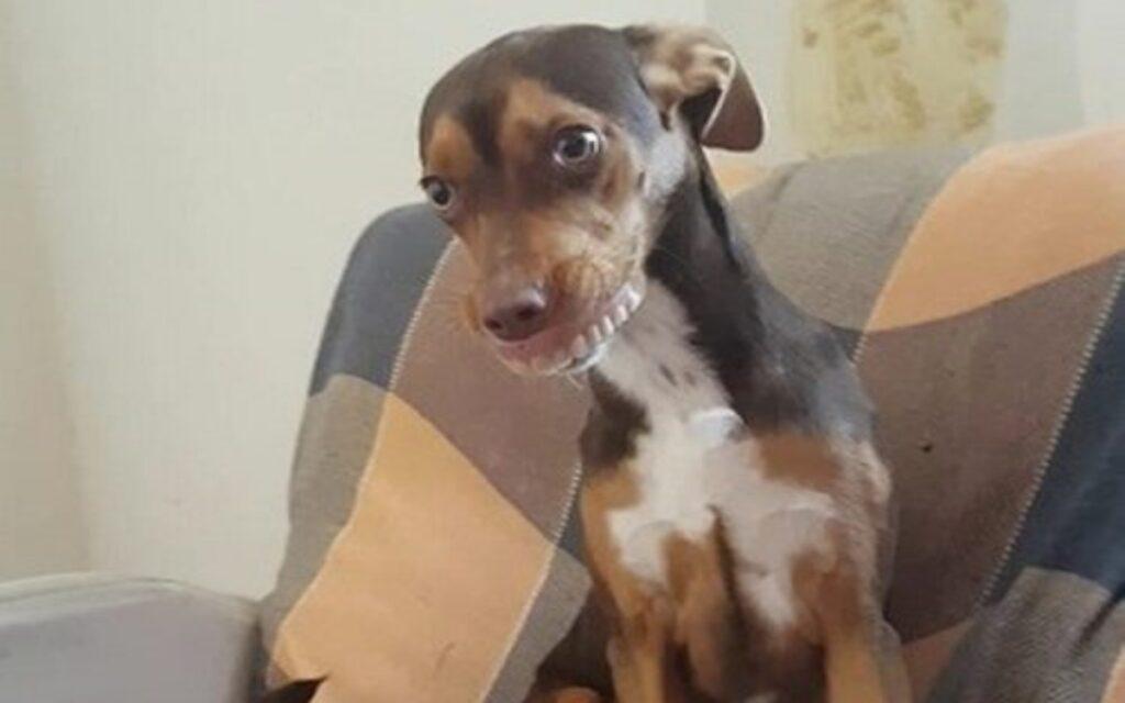 cane ruba dentiera della nonna