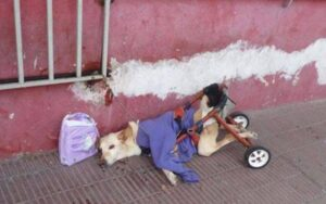 cane disabile viene adottato e trova finalmente la felicità