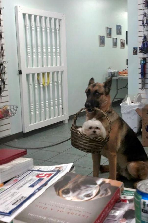 cani che fanno cose divertenti