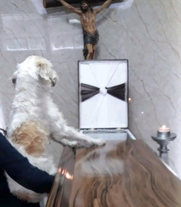 cane rimane vicino al suo proprietario defunto durante il suo funerale