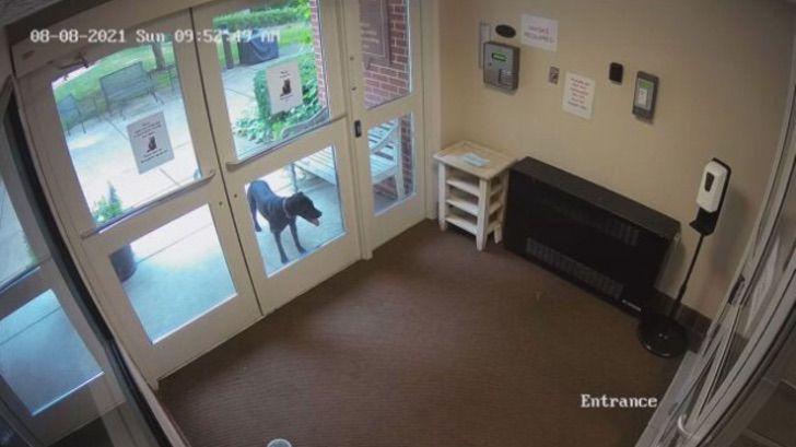 cane scappa per cercare la sua proprietaria nel suo luogo di lavoro
