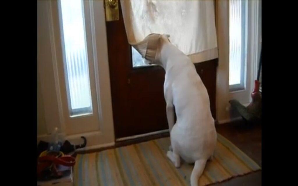 cane si emoziona dopo che rivede il suo padrone