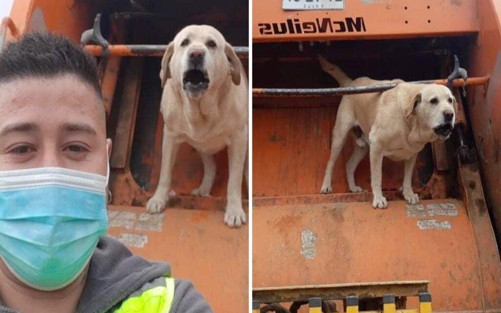 cane si distrae da delle carezze e sbaglia camion perdendosi