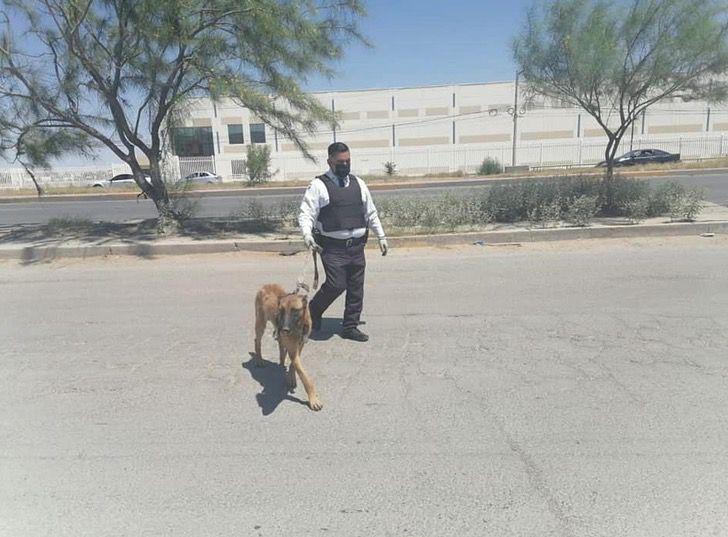 cane viene abbandonato senza cibo ne acqua legato a un albero