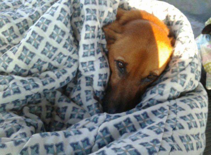 operai costruiscono dei letti a dei cani randagi