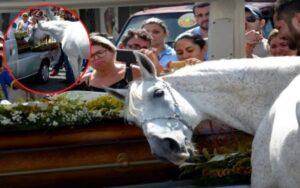 cavallo piange al funerale del suo proprietario defunto
