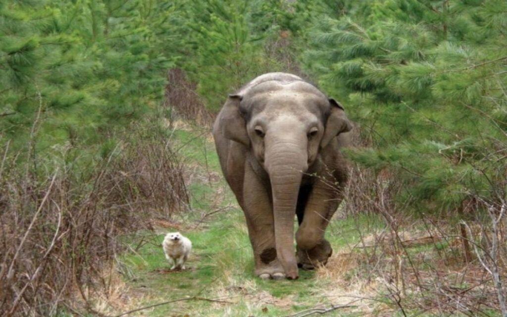 un elefante e un cane diventano amici inseparabili