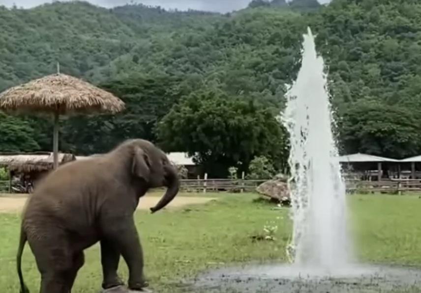 un elefantino gioca con un tubo dell'irrigazione rotto