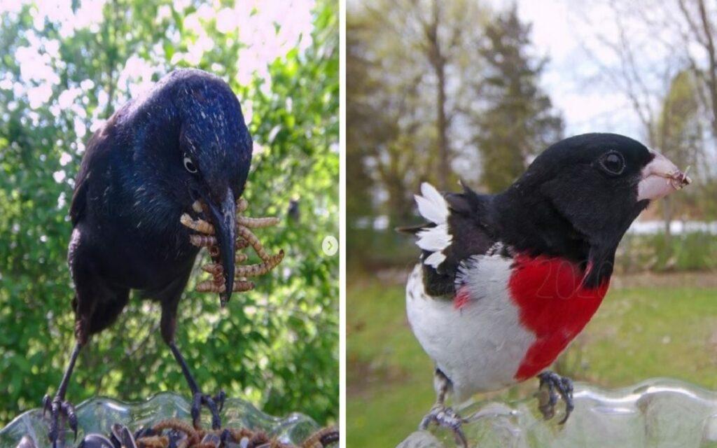 donna fotografa gli uccelli nella mangiatoia