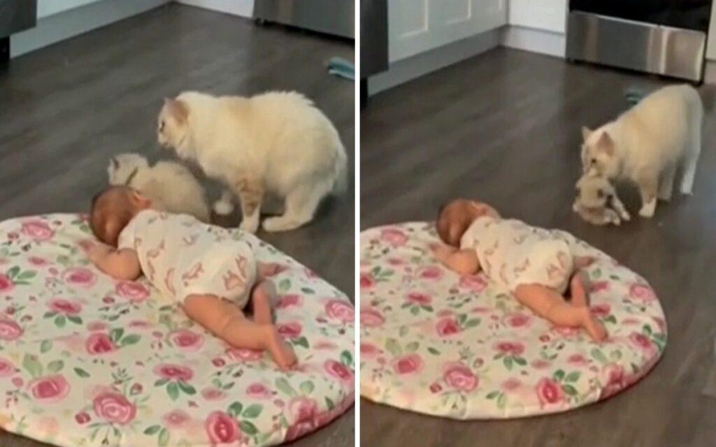 mamma gatta presenta cucciolo a un bambino