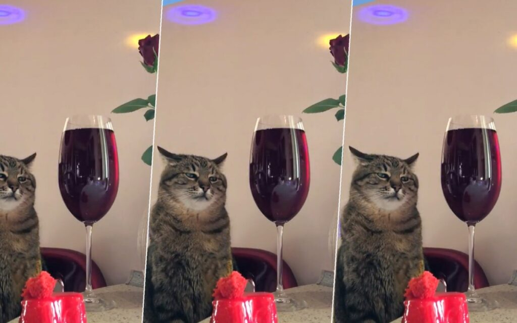 gatto diventa virale grazie alle sue espressioni tristi