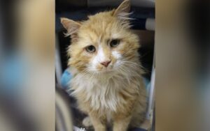 gatto torna dalla sua famiglia dopo che lo aveva abbandonato