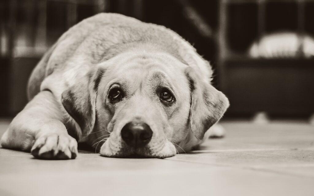 cane salvato dalla polizia da delle crisi epilettiche